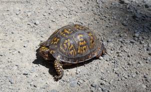 Turtle on Road MotoaDVR