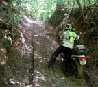 Mountain Springs Road Ruts Tom Witt