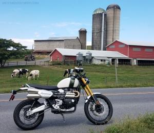Triumph Scrambler 1200 XE Virginia Farm MotoADVR