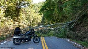 Triumph Scrambler Tree Roadblock MotoADVR