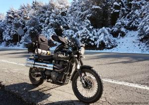 Snowy Pine Trees Triumph Scrambler MotoADVR
