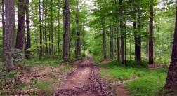 Hoye Crest Trail MotoADVR